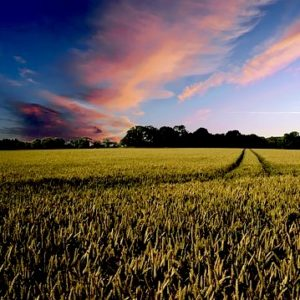 farm fields with clouds